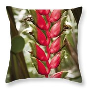 Lobster Claw Throw Pillow