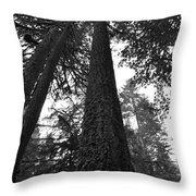 Lofty Tree Throw Pillow