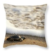 Loggerhead Turtle Hatchling 3 Delray Beach Florida Throw Pillow