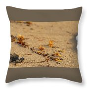 Loggerhead Turtle Hatchling Delray Beach Florida Throw Pillow