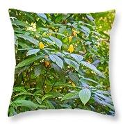 Lollipop Bush In Bourbon Resort Gardens Near Iguazu Falls National Park-brazil  Throw Pillow