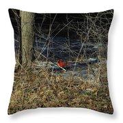 Lone Cardinal Throw Pillow