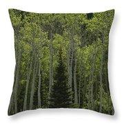 Lone Evergreen Amongst Aspen Trees Throw Pillow by Raymond Gehman