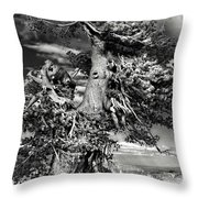 Lone Gnarled Old Bristlecone Pines At Crater Lake - Oregon Throw Pillow