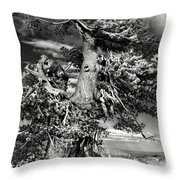 Lone Gnarled Old Bristlecone Pines At Crater Lake - Oregon Throw Pillow by Christine Till