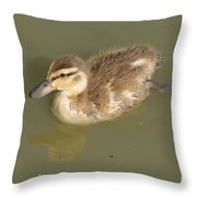 Lone Mallard Duck Duckling Throw Pillow