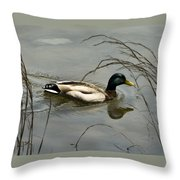 Lone Mallard Throw Pillow
