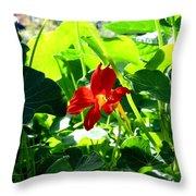 Lone Nasturtium   Throw Pillow