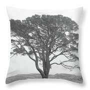 Lone Scots Pine, Crannoch Woods Throw Pillow