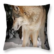 Lone Wolf IIi Throw Pillow