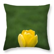 Lone Yellow Tulip Throw Pillow