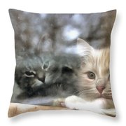 Lonely Kittens Behind The Glass Throw Pillow
