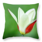 Lonely Lady Tulip Throw Pillow