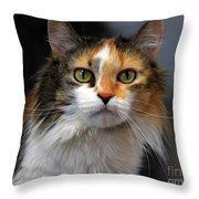 Long Haired Calico Cat Throw Pillow