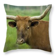 Long Horn Cow Throw Pillow