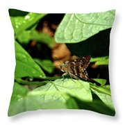 Long Tail Skipper Butterfly 1 Throw Pillow