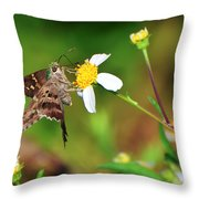 Long-tailed Skipper Butterfly Throw Pillow