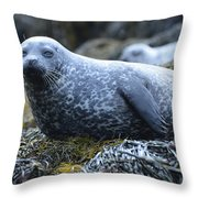 Long Whiskers On A Harbor Seal Throw Pillow