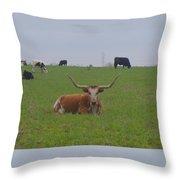 Longhorn At Rest Throw Pillow