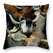 Longhorn Cattle Are Packed Throw Pillow by Joel Sartore