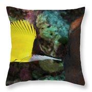 Longnose Butterflyfish Throw Pillow by Steve Rosenberg - Printscapes