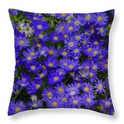 Longwood Hybrid Cineraria Throw Pillow