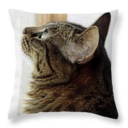 Look Out Window Tabby Cat Throw Pillow
