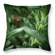 Lookin' For A Meal Throw Pillow