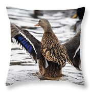 Looking At Me  Throw Pillow