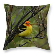 Looking At You - Western Tanager Throw Pillow