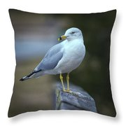 Looking Back  Throw Pillow by Cindy Lark Hartman