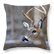 Looking Back Whitetail Deer Throw Pillow