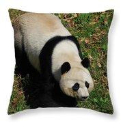 Looking Down At A Cute Giant Panda Bear Throw Pillow