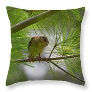 Looking Down - Common Sparrow - Passer Domesticus Throw Pillow