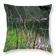Looking For A Mate Throw Pillow