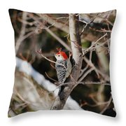 Looking For A Place To Peck Throw Pillow