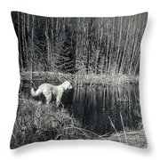 Looking For Beaver Throw Pillow
