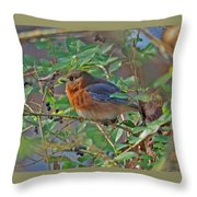 Looking For Berries Throw Pillow