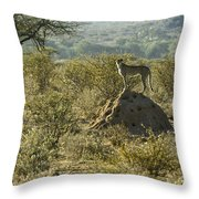 Looking For Dinner Throw Pillow