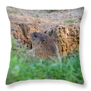 Looking For Intruders Throw Pillow