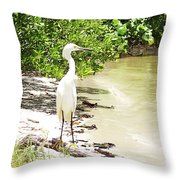 Looking For Lunch Gp Throw Pillow