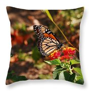 Looking For Nectar Throw Pillow