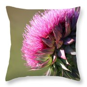 Looking For Sun Throw Pillow