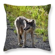 Looking For That Roadrunner Throw Pillow
