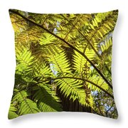 Looking Up To A Beautiful Sunglowing Fern In A Tropical Forest Throw Pillow