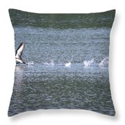 Loon Ascending... Throw Pillow
