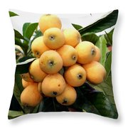 Loquat Exotic Tropical Fruit 4 Throw Pillow