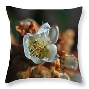 Loquat Flower Throw Pillow