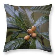 Loquat Fruit Throw Pillow