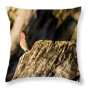 King Of The Realm Throw Pillow